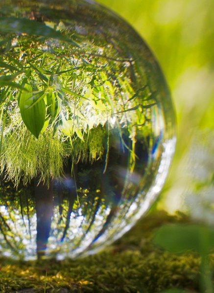 bullet, environment, grass-3290624.jpg